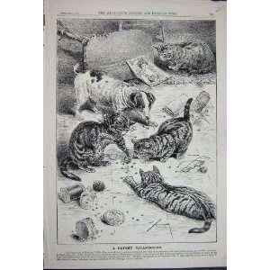 1891 Advertisement Beechams Pills Kitten Cats Pets