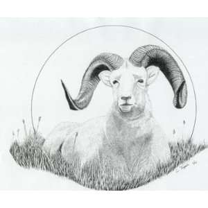 Matted Print   Dall Sheep: Home & Kitchen