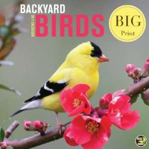 Backyard Birds (Big Print) 2011 Wall Calendar