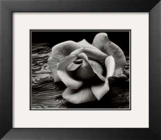 Rose and Driftwood, San Francisco, California Prints by Ansel Adams at