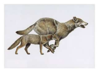 Extinct dog ancestor Eucyon, and todays gray wolf. Giclee Print by