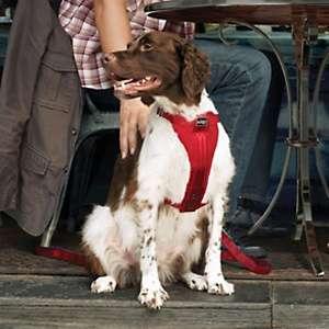 Home Solutions Kurgo Pet Products Pet & Dog Collars